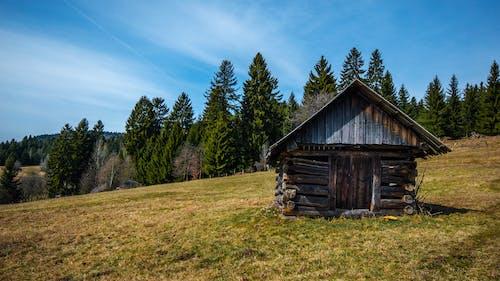 Photos gratuites de arbres, bâtiment ancien, bûches de bois, cabane en bois