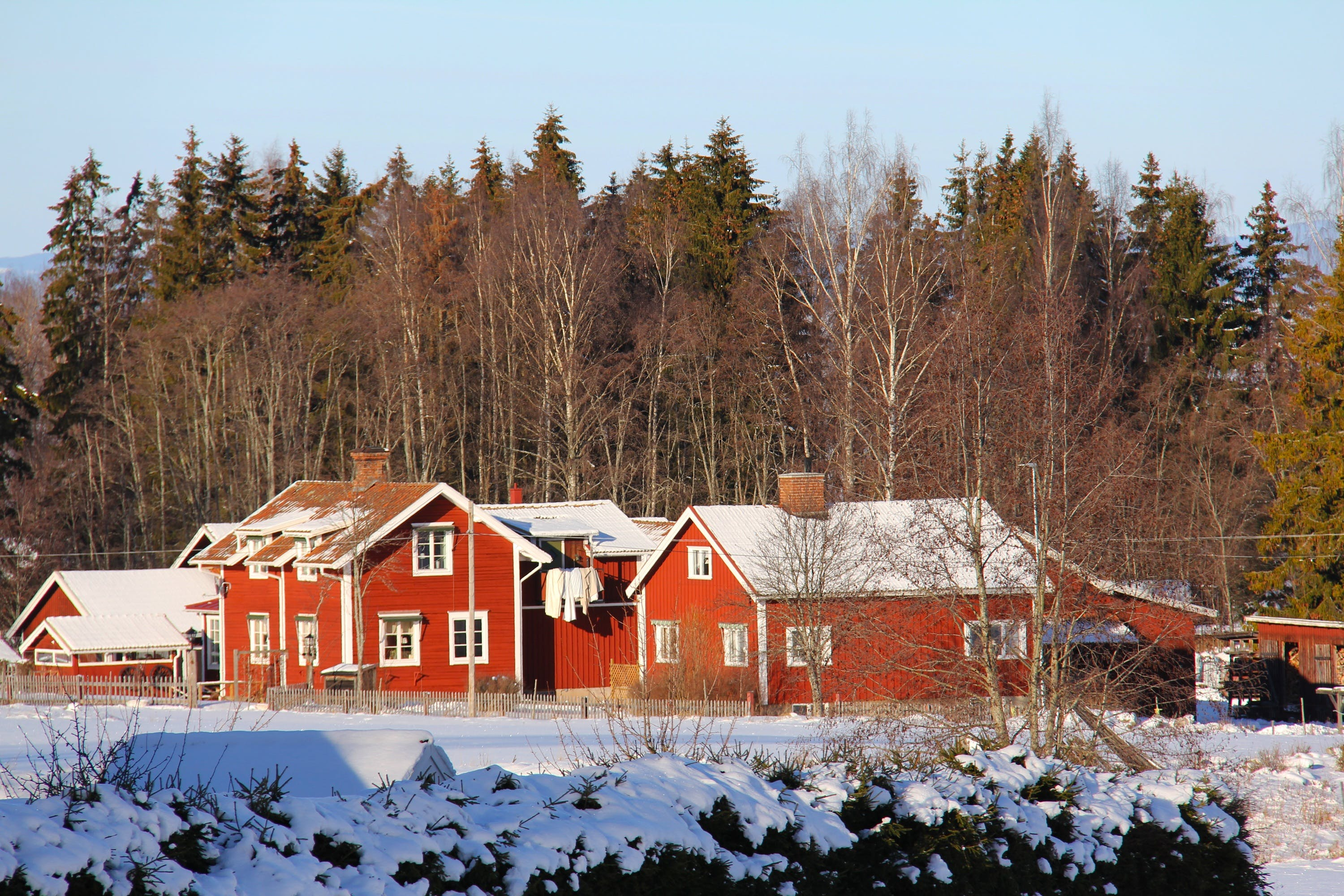 Red Wooden Houses Near Trees
