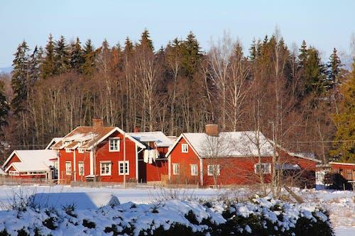 Foto profissional grátis de abetos, árvores, cabine, casa de campo
