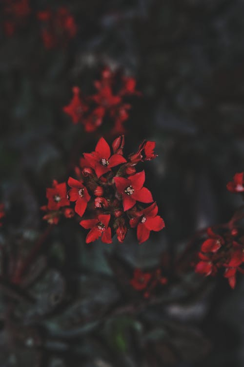 Small red flowers in garden