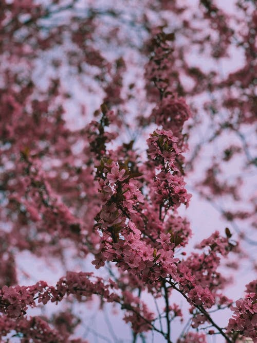 Tiny pink flowers on branch of bush