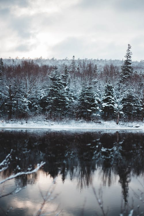 View of grey sky above woodland covered with snow reflecting from surface of river in winter
