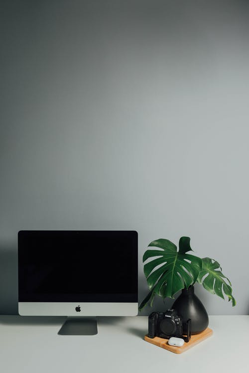 Computer monitor with black screen near plant