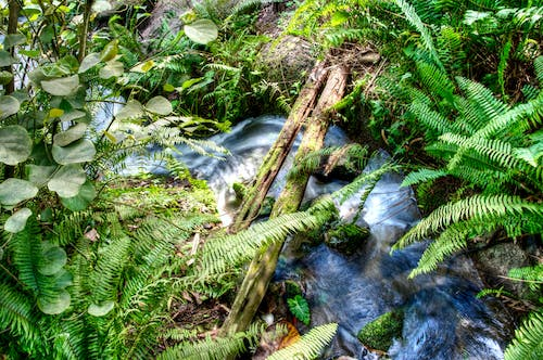 Free stock photo of ferns, foliage, long exposure, stream