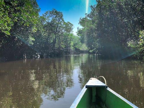 Foto d'estoc gratuïta de a l'aire lliure, aigua, arbre, barca