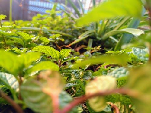 Aloe Vera, botanik bahçe, çimenlik, mera içeren Ücretsiz stok fotoğraf
