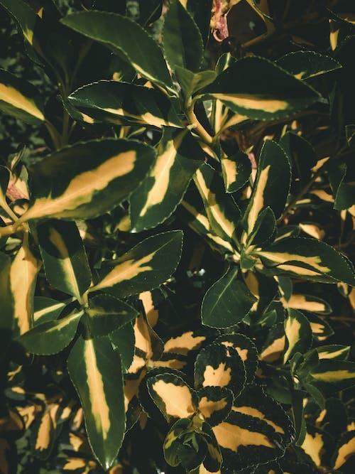 Free stock photo of #fern leaf, #mobilechallenge, #outdoorchallenge