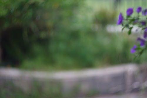 Free stock photo of blur background, flowers, garden