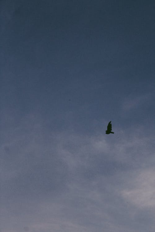 Δωρεάν στοκ φωτογραφιών με άγρια φύση, αεροπλάνο, αεροσκάφος, Άνθρωποι