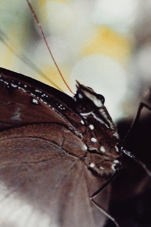 Δωρεάν στοκ φωτογραφιών με άγρια φύση, αντένα, ασπόνδυλος, βιολογία