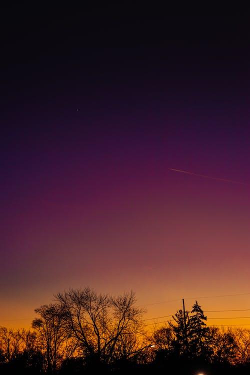 Základová fotografie zdarma na téma fialová, jetstream, na výšku