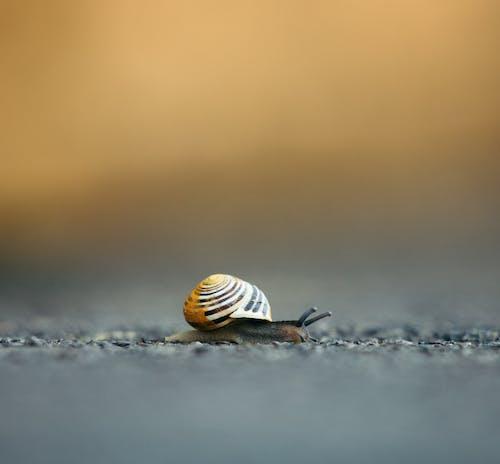 Closeup of white lipped snail crawling on ground