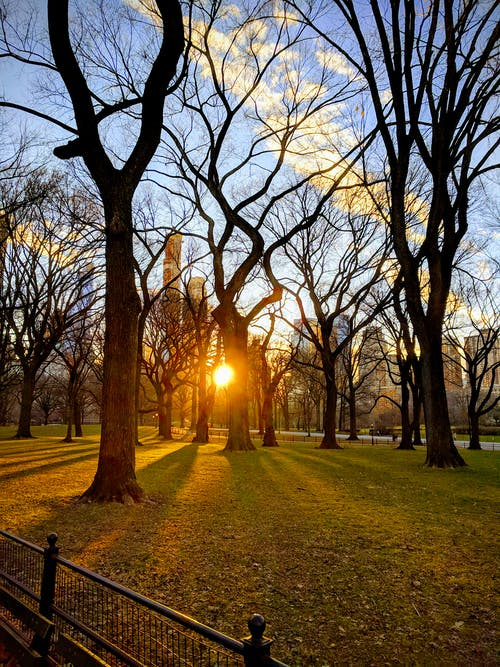 Free stock photo of central, central park, grass, manhattan