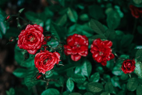 Základová fotografie zdarma na téma barva, dekorace, elegantní, flóra