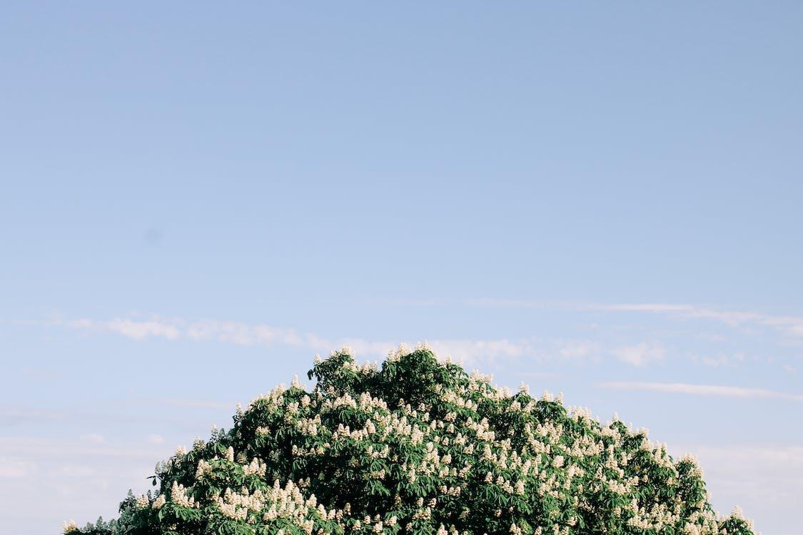 błękitne niebo, drzewo, flora