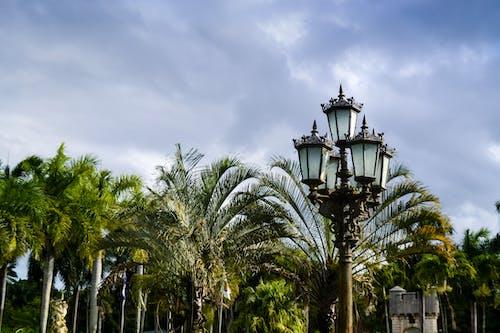 Foto d'estoc gratuïta de a l'aire lliure, arbre, arquitectura, carrer