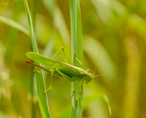 Side view of green beetle sitting on thin grass against blurred background of plants