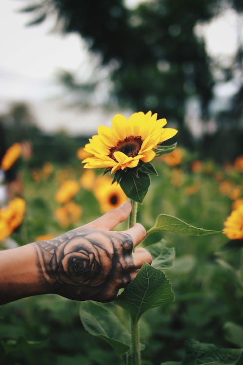 Fotos de stock gratuitas de afuera, agricultura, aire libre