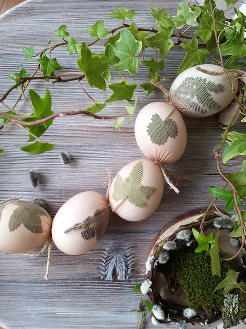 White Egg on Green Leaves