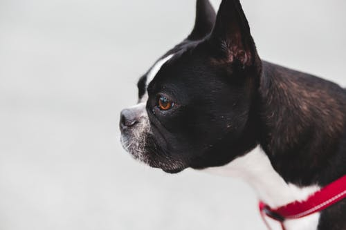 Cute dog standing on street
