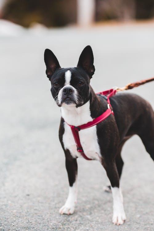 Black dog standing on asphalt