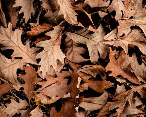 Brown Leaves on Brown Soil