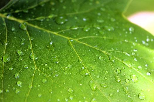 Free stock photo of plant, leaf, rain, raindrops