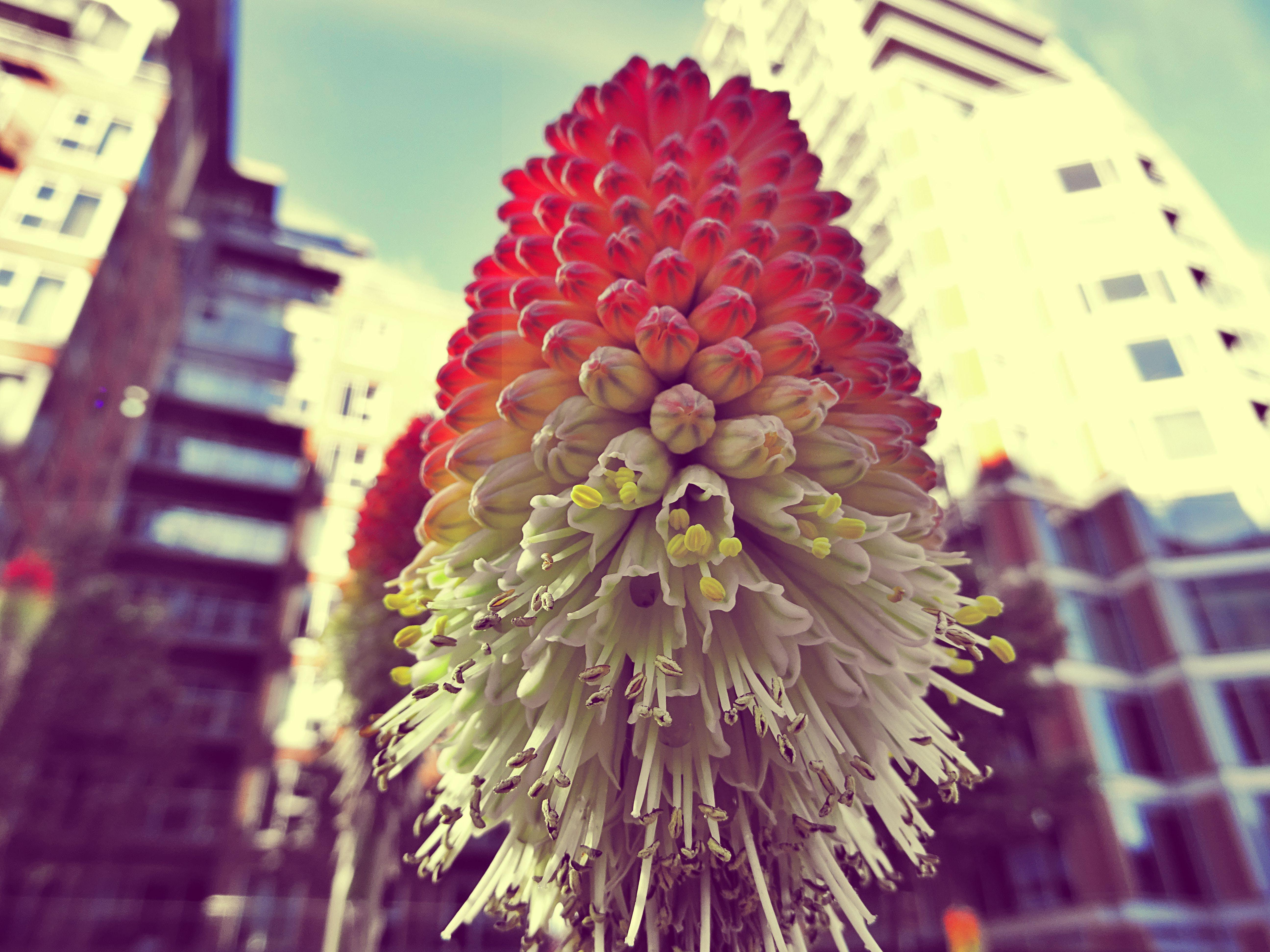 Gratis lagerfoto af blomster, blomstrende, boligblokke, close-up