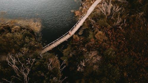 Fotobanka sbezplatnými fotkami na tému chôdza, človek, drevený most