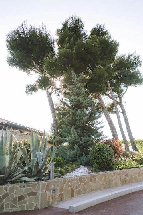 Ảnh lưu trữ miễn phí về cây, cây cao, hệ thực vật