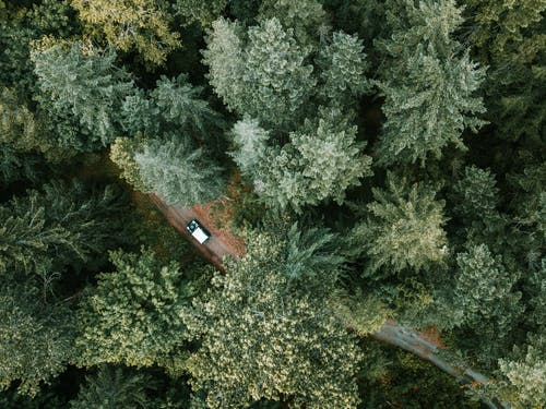 Top View of a Vehicle Traveling in the Middle of a Dense Forest