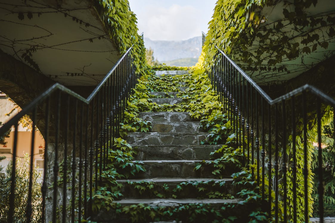 A Concrete Stairs Full of Vines