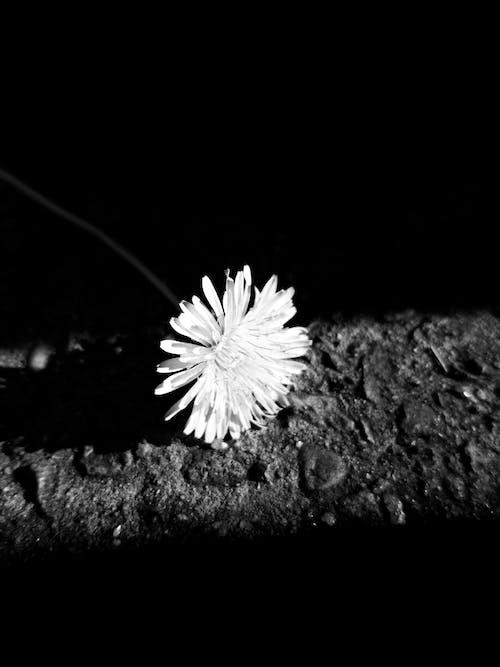 격리, 그림자, 근접 초점, 꽃 피는 식물의 무료 스톡 사진