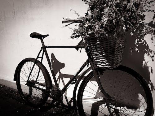 Darmowe zdjęcie z galerii z czarno-biały, kontrast, na ulicy, rower
