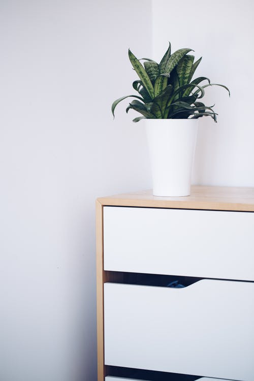 Green Plant in White Ceramic Pot on White Wooden Table