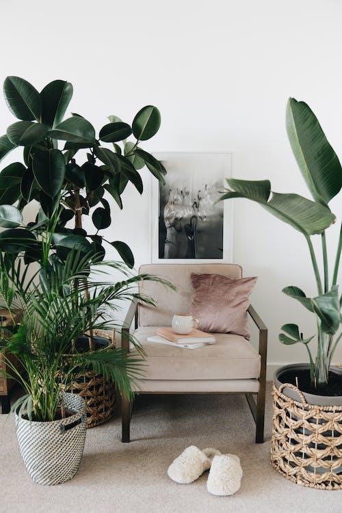Foto profissional grátis de apartamento, aumento, cadeira, cátedra