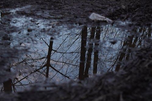 Kostenloses Stock Foto zu aste, bäume, pfütze