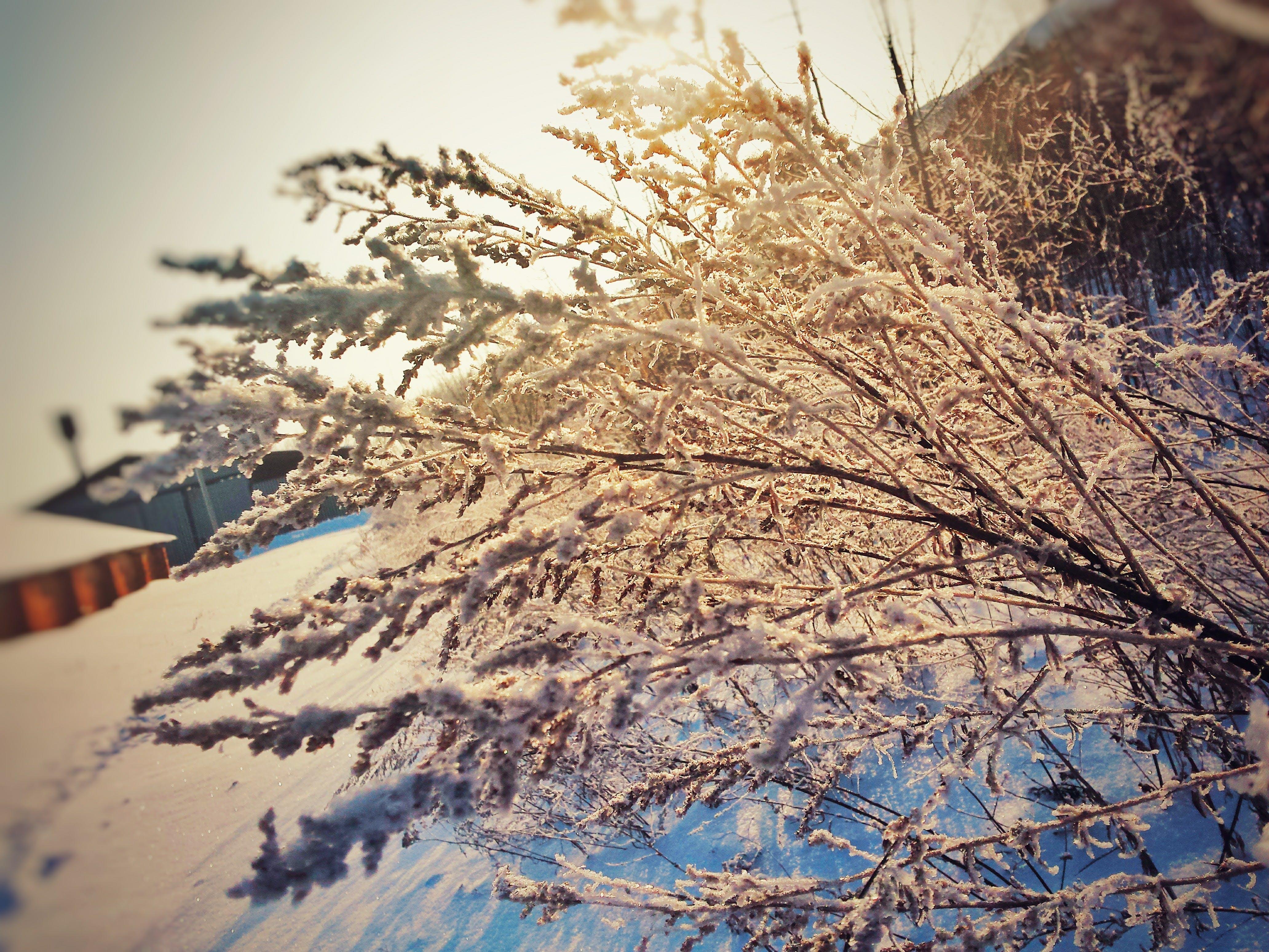 Δωρεάν στοκ φωτογραφιών με cool, Δεκέμβριος, ήλιος, ιανουάριος