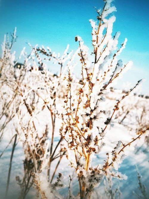 Fotobanka sbezplatnými fotkami na tému chladný, december, január, krása