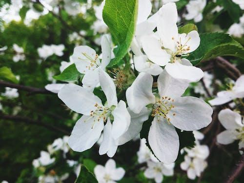 Fotobanka sbezplatnými fotkami na tému kvety, príroda, zeleň
