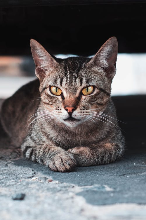 Cute cat with green eyes resting on street road