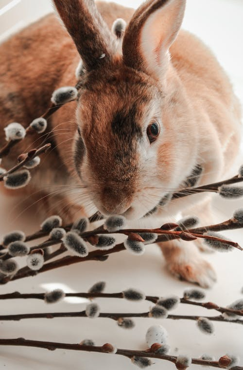 Brown Rabbit on Brown Wooden Table