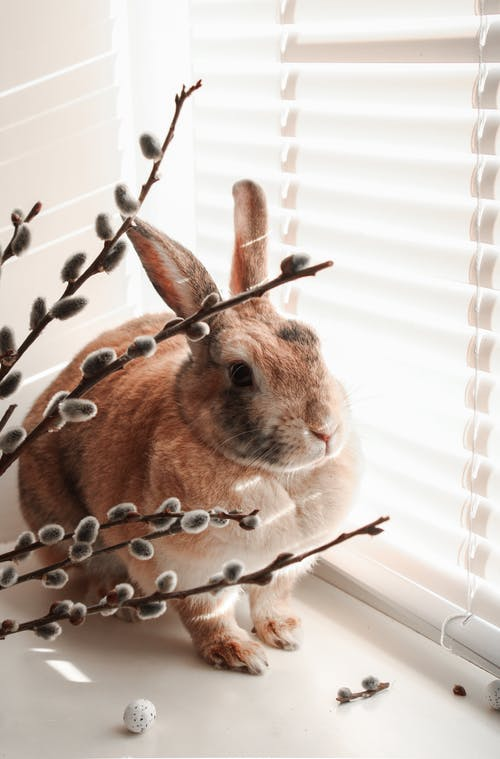 Brown Rabbit on White Window Blinds