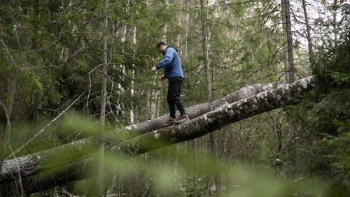 Unrecognizable trendy man walking on fallen tree trunks in forest