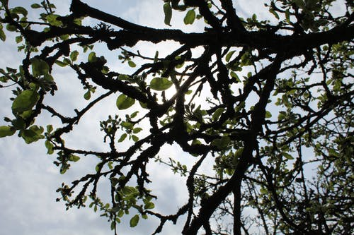Безкоштовне стокове фото на тему «відділення, дерево, сонце, хмари»