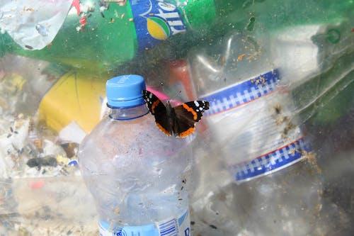 Безкоштовне стокове фото на тему «відходи, забруднення, Метелик, пластиковий»