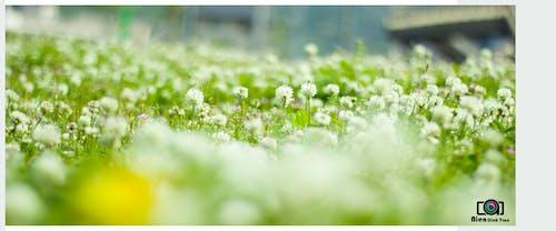 Free stock photo of flower, hoa