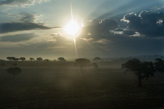 Free stock photo of dawn, nature, sunset, sun