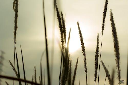 태양의 무료 스톡 사진