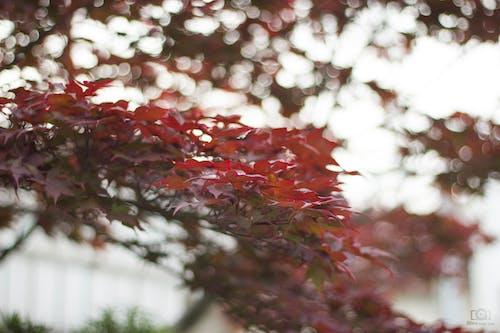 Darmowe zdjęcie z galerii z japoński, kwiat, słońce